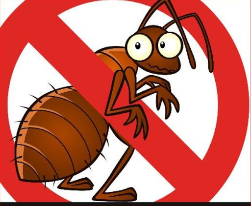 Quick Guide on Basic Pest Control Processes and its Major Equipment