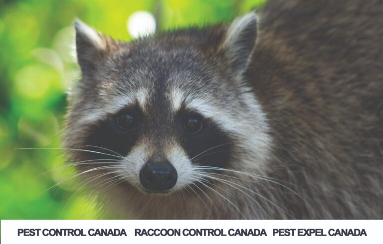 Rodents control in Canada