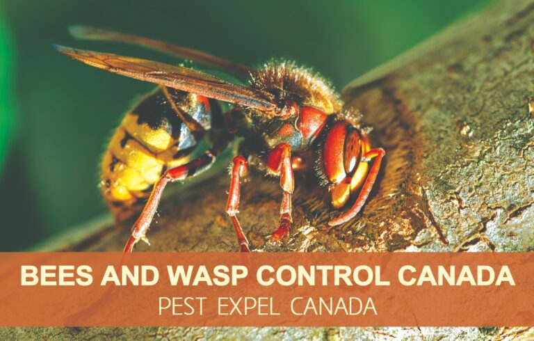 bees and wasp removal in Canada