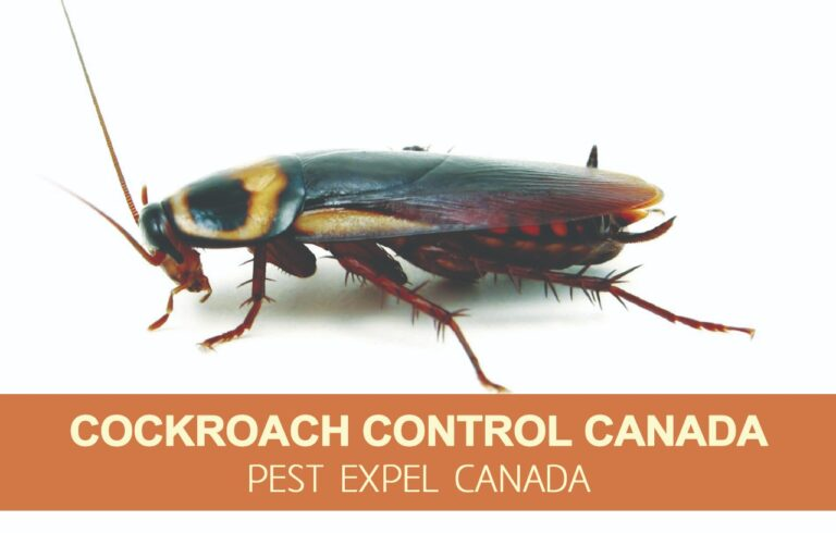 cockroach removal in Canada