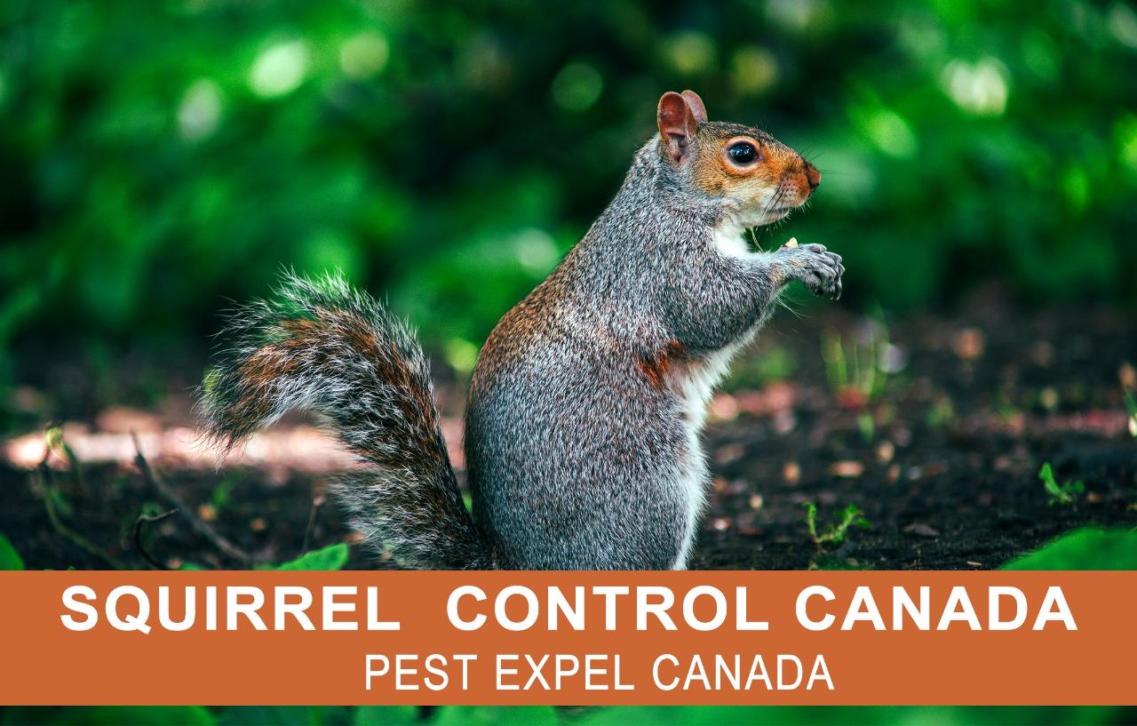 squirrel control Canada